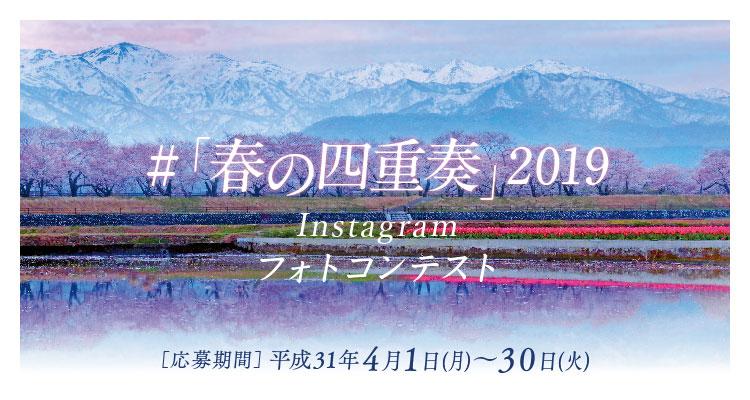 あさひ舟川「春の四重奏」フォトコンテスト2019
