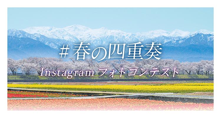 あさひ舟川「春の四重奏」フォトコンテスト2020