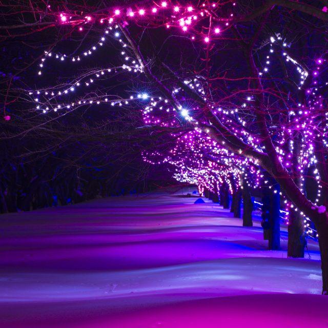 光の桜並木