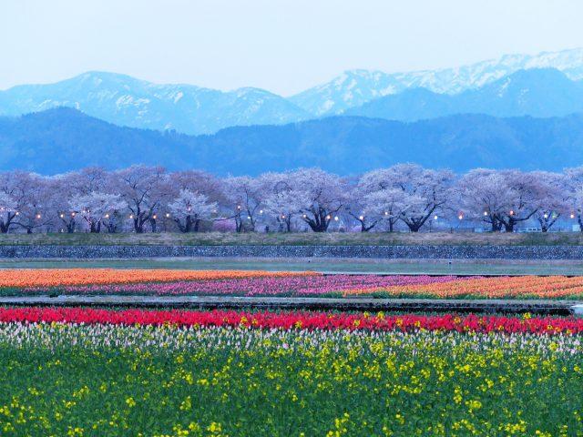 あさひ舟川「春の四重奏」