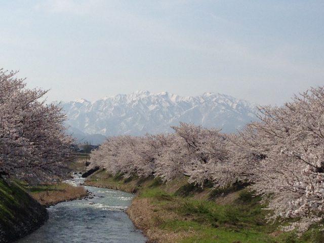 僧ヶ岳・駒ヶ岳ポイント